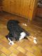 Huetten hund Aramis na Lienzener Tauplitzhausu